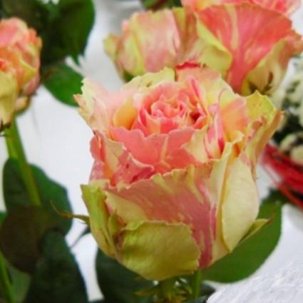Где купить кусты розы в москве недорого — img 6